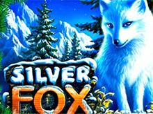Silver Fox в казино Чемпион на деньги