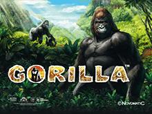 В казино Чемпион на деньги Gorilla
