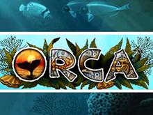 Новые игры в клубе Чемпион Orca
