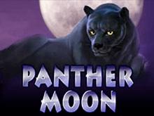 Играть в новые Panther Moon
